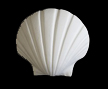 magnets-seashell-2